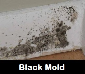 Black Mold Is Very Toxic Because It Gives Of Mycotoxins